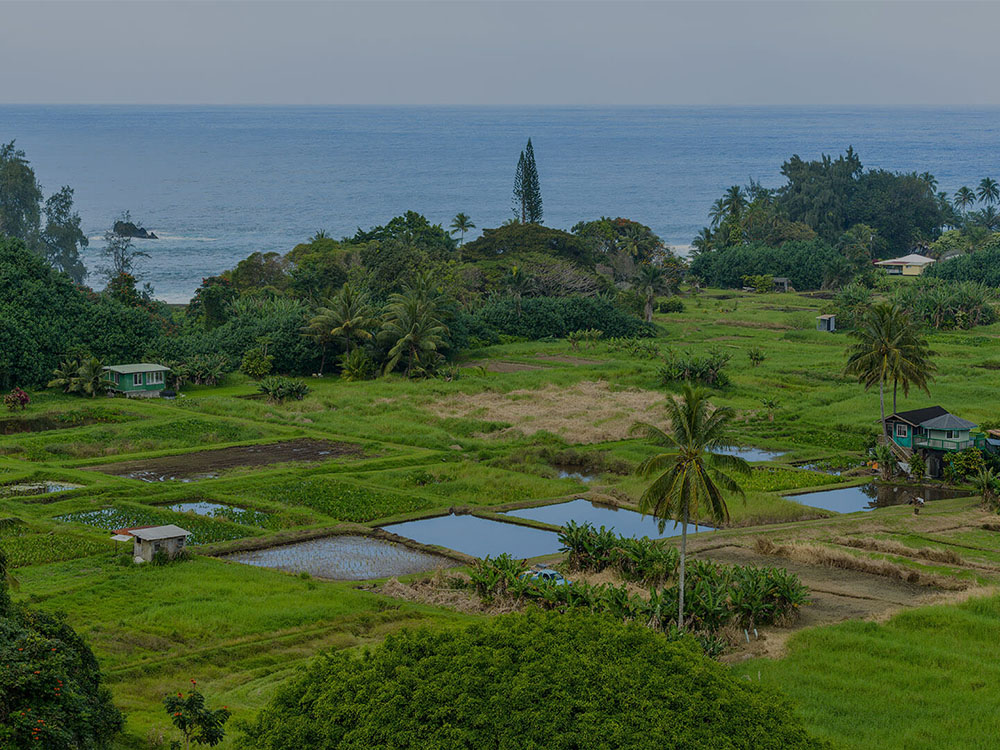 Kaneohe Landscaping